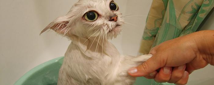 Процедура купания животного