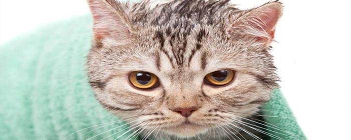 Какими средствами мыть кота