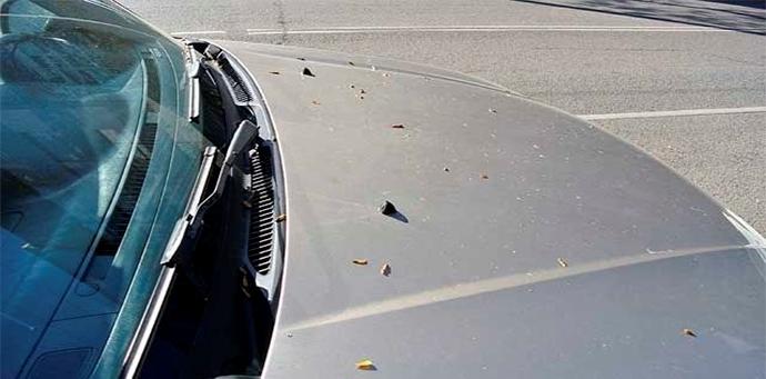 Защита автомобиля от почек