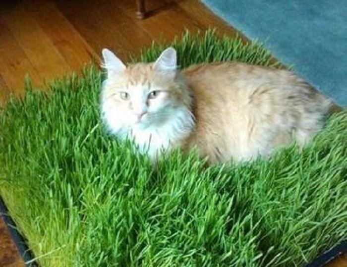 искусственный газон для кошки