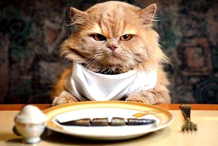 толстый кот обжора