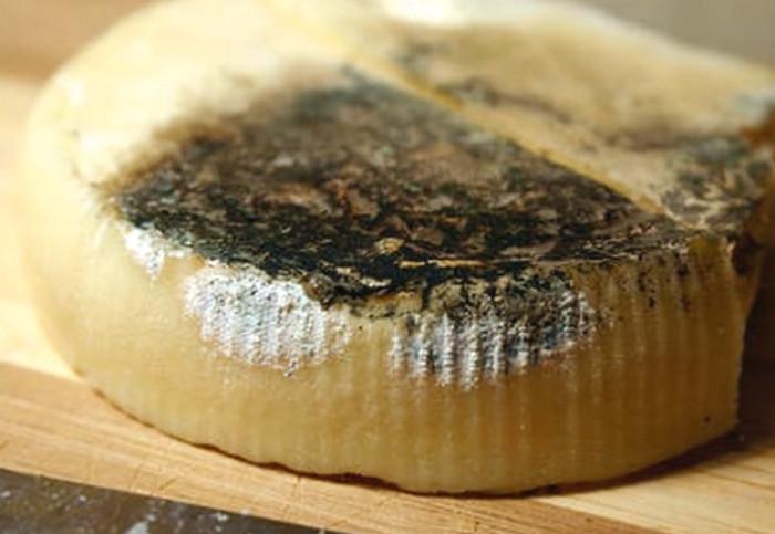 заплесневелый сыр