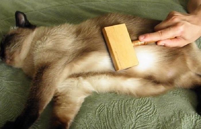 Выведение шерсти у кошки в домашних условиях