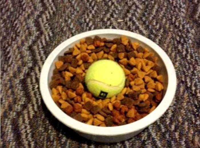 теннисный мяч в миске с кормом