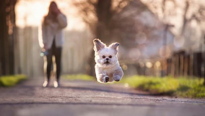 убегающая собака