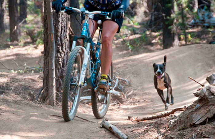 собака бежит за велосипедистом