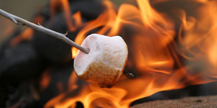 жарят на костре маршмеллоу