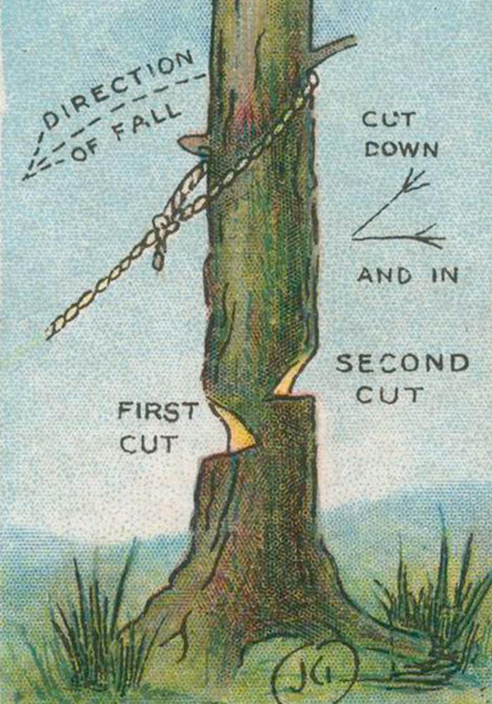 валить подрубленное дерево