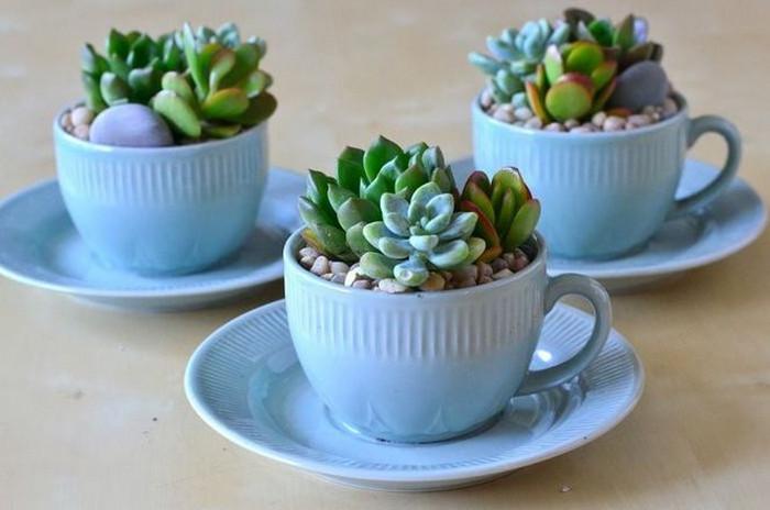 чашки с растениями
