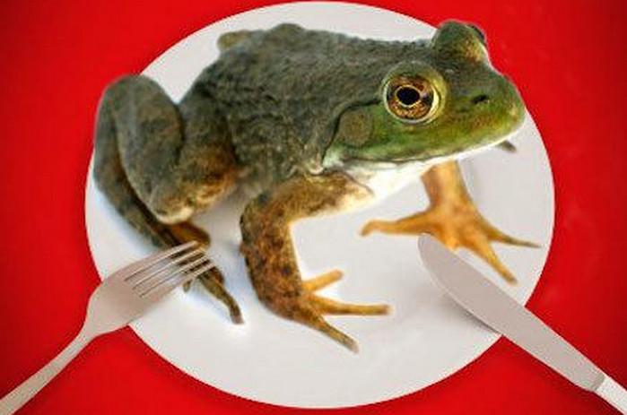 лягушка на тарелке