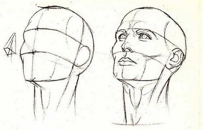 рисунок карандашом анатомия лица