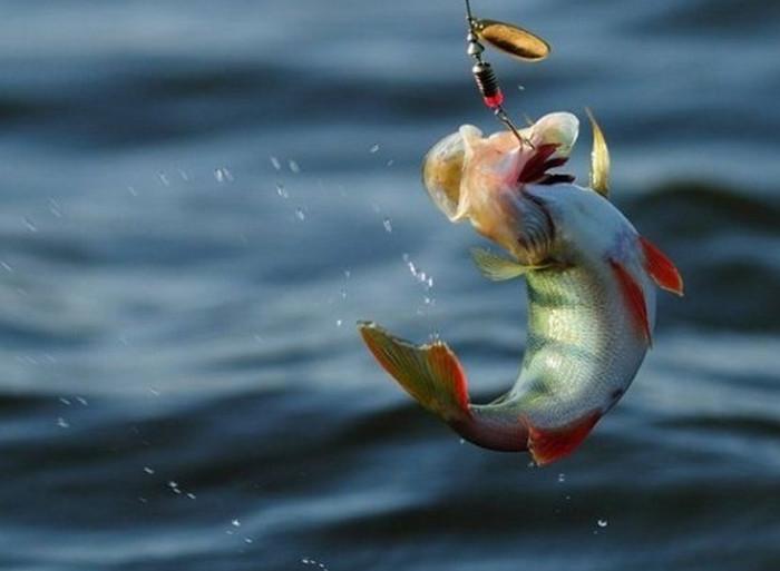 рыбка на крючке