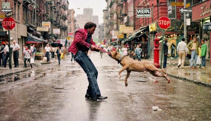 собака прыгает на человека