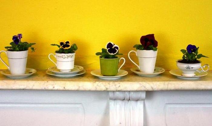 горшочные цветы в чашках