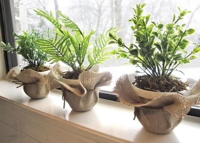 растения в горшках на подоконнике