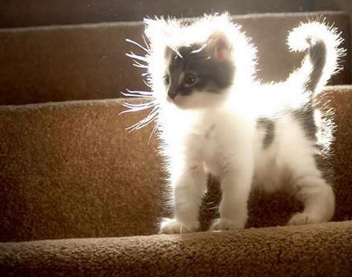 котенок в солнечных лучах