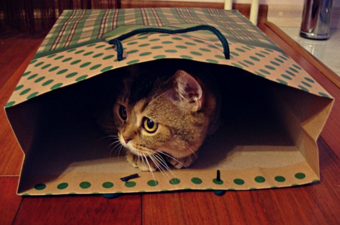 кошка сидит в бумажном пакете