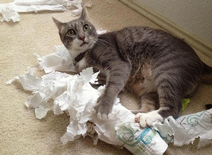 кошка и разорванный рулон бумаги