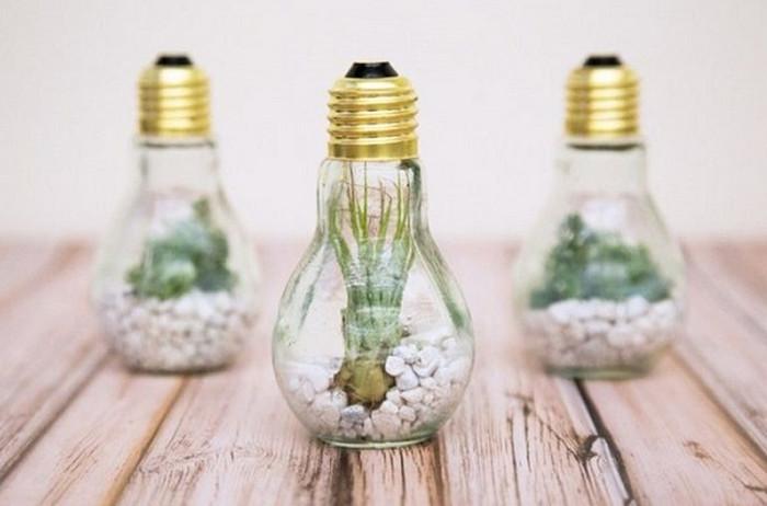 кактус в лампочке