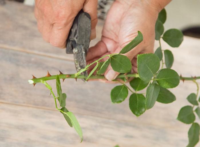 мужчина отрезает листья у срезанных цветов