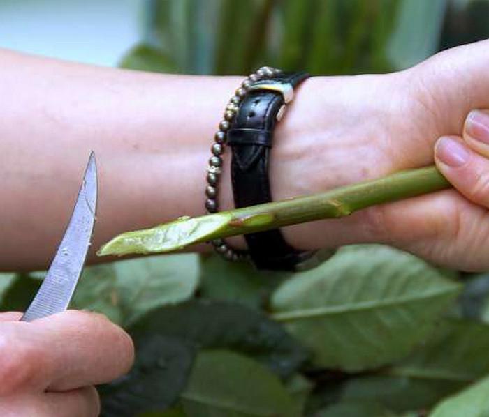 делать косой срез на стеблях цветов