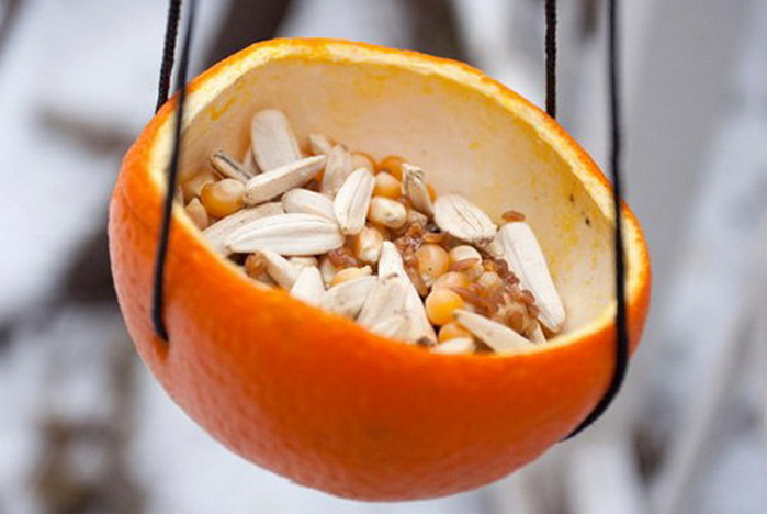кормушка из апельсиновой кожуры