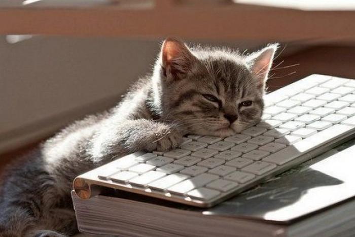 кот спит на клавиатуре