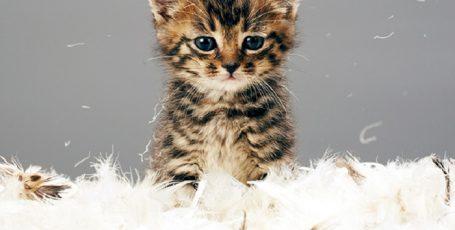 Топ 10 гениальных лайфхаков для владельцев кошек