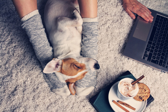 спящий на длинноворсовом ковре щенок