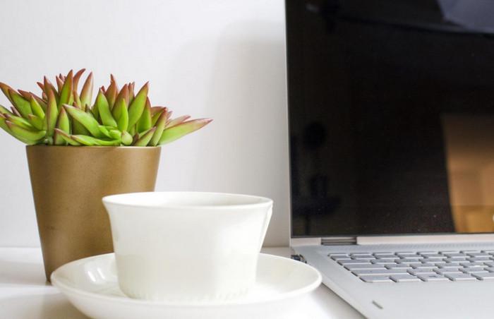 горшочное растение на столе