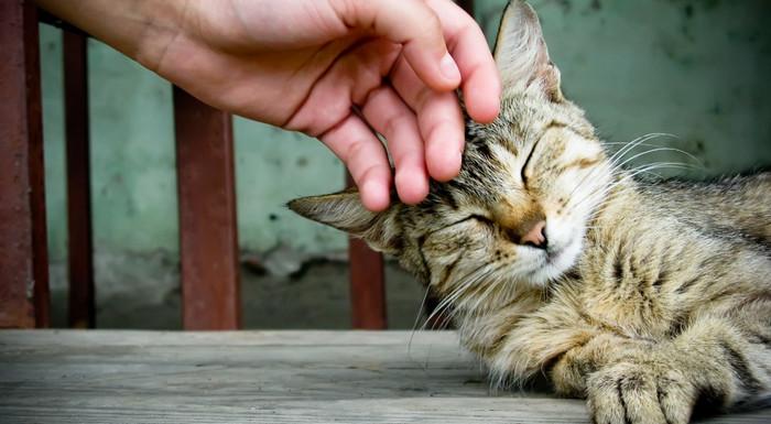 человек гладит кота