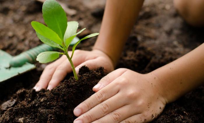 сажать дерево