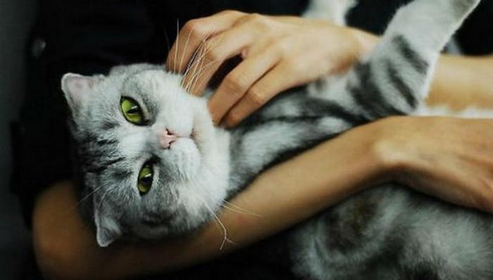 девушка гладит кота