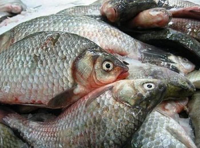 рыба с чешуей
