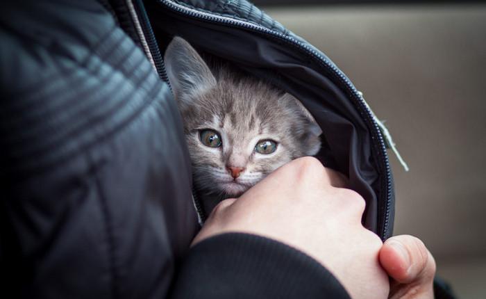 котенок за пазухой