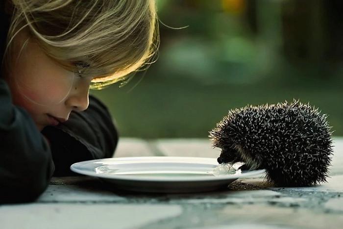 мальчик кормит ежа