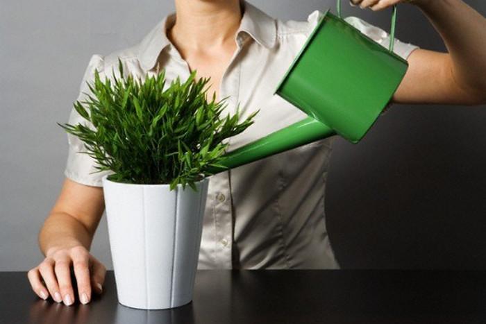 поливать горшочные растения