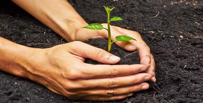человек сажает дерево