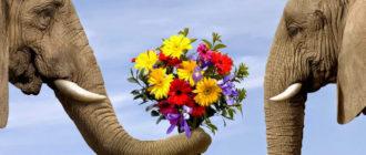 слон дарит цветы слонихе