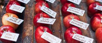 рассадочные карточки в яблоках