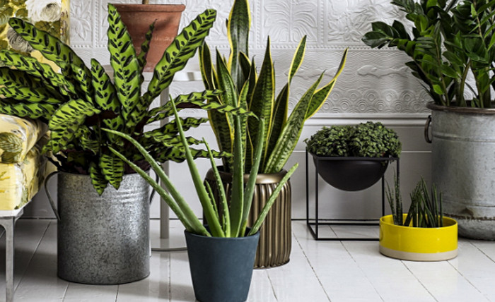 горшочные растения