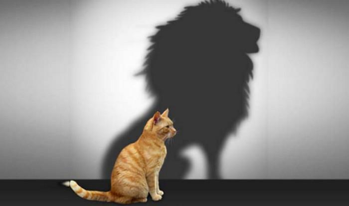 отражение от кота в виде льва