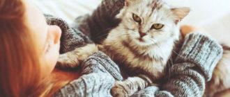 кошка и девушка