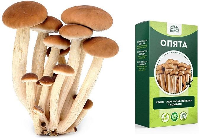 Коробки-грибницы «Золотой Урожай» Грибная ферма: позволят вырастить грибы самостоятельно за короткий срок!