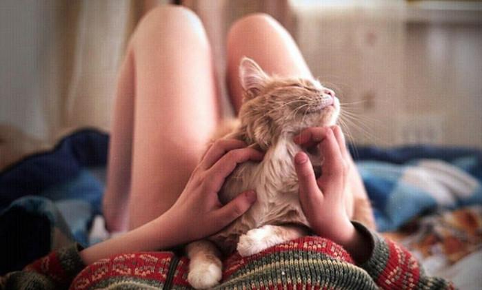 гладит кота