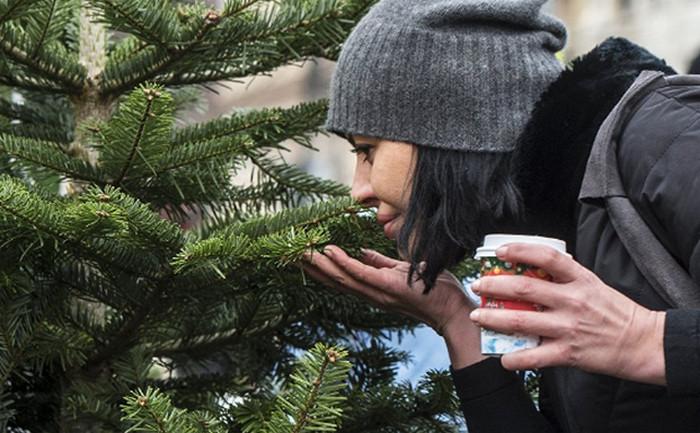 девушка трогает елку