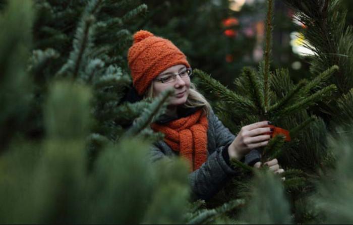 девушка выбирает елку