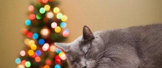 кот спит возле елки