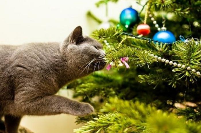 кот нюхает елку