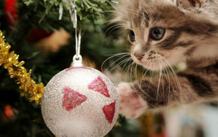 кот трогает шарик на елке